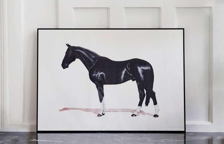 Häst, 2016, Johan Ray Pedersen