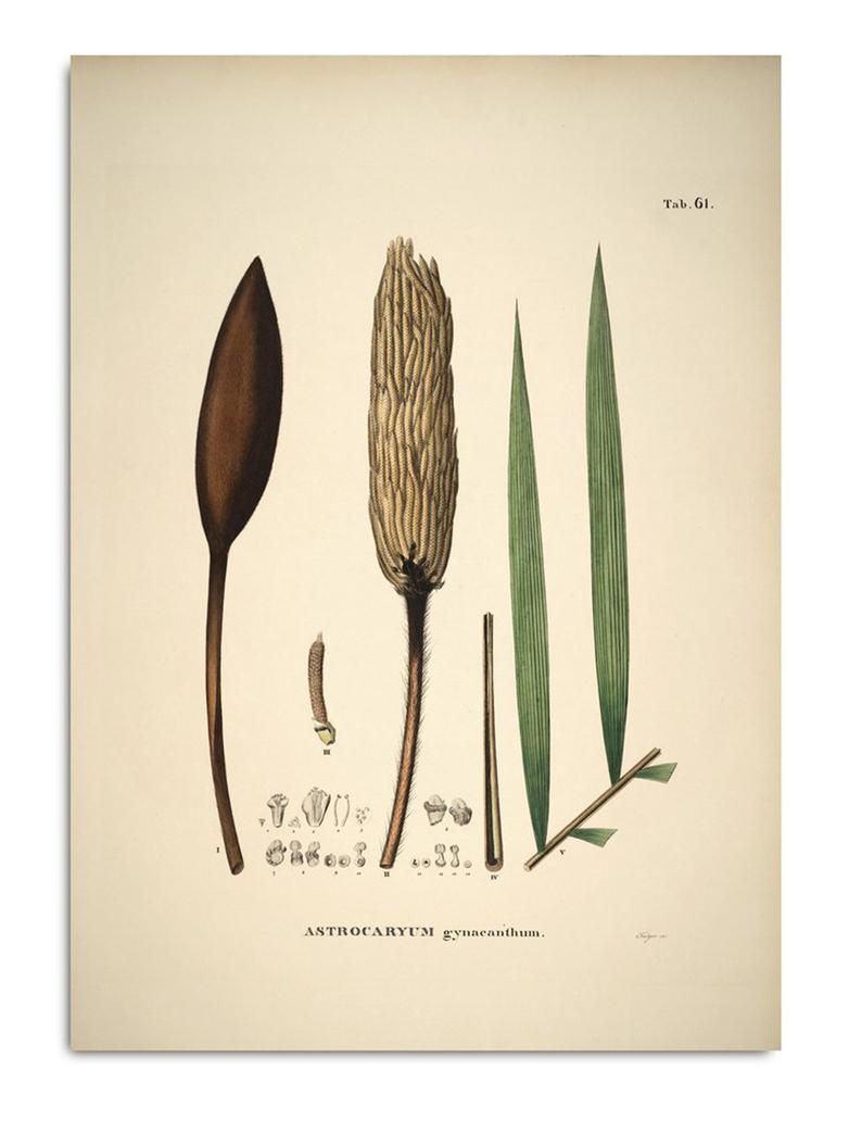Botanical Palm Print Geonoma Astrocaryum