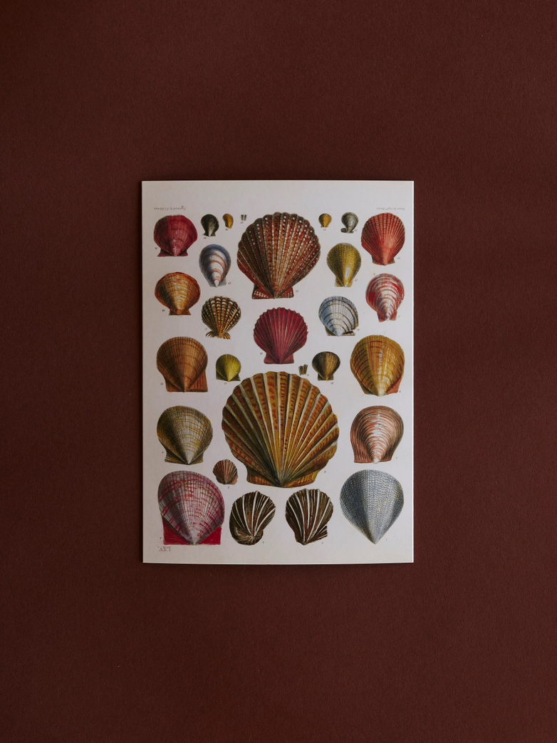 Shells Card With Envelope