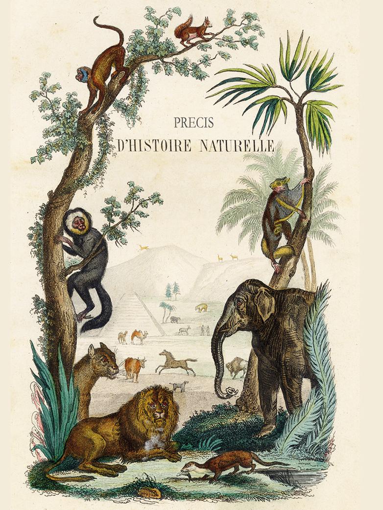 Notebook A5 Monkey