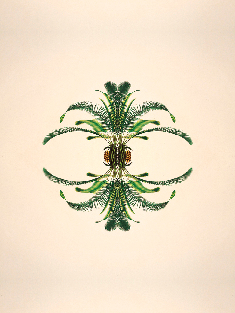 Limited Botanical reflection I
